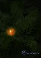 Цветение папоротника на Ивана Купала